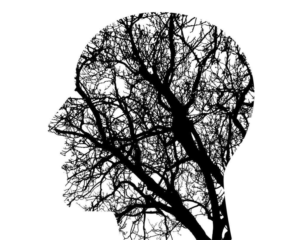 ¿Hay algo después de la muerte? Para estos cerebros, 36 horas de vida extra