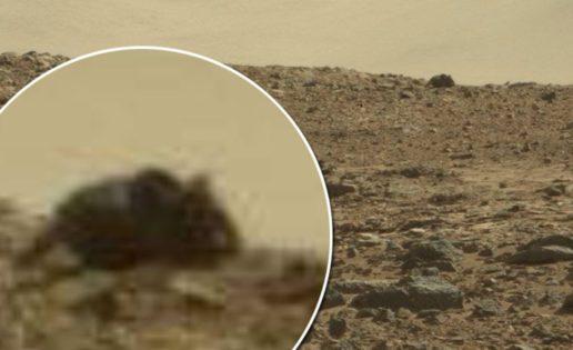 ¿Un RatóN En Marte?