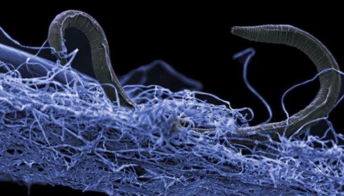 Podría existir todo un ecosistema bajo la superficie de la Tierra