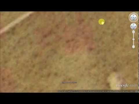 Vegetación en Marte?