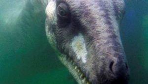 Historias increíbles de criaturas increíbles