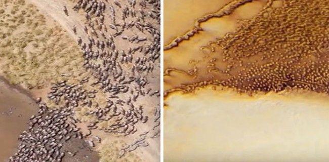 La Nasa: ¿Una manada de animales extraterrestres corriendo en Marte?