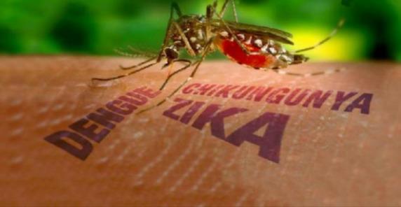 E.U Provocó Brote de Dengue Hemorrágico en Cuba en 1981.
