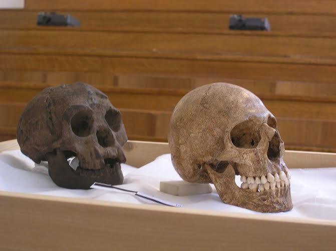 Enanos y Gigantes: La Teoría de las Tres Especies de Humanos