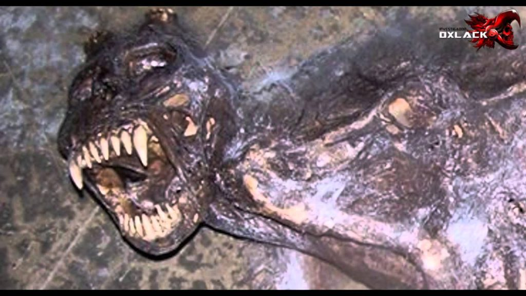 Encuentran Cadaver del Chupacabras en Campeche