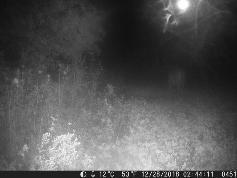 Objeto esférico luminoso es captado «persiguiendo» a un ciervo (Imágenes)