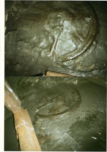 Hallan misterioso fósil de rueda en una mina de carbón que data de hace 300 millones de años