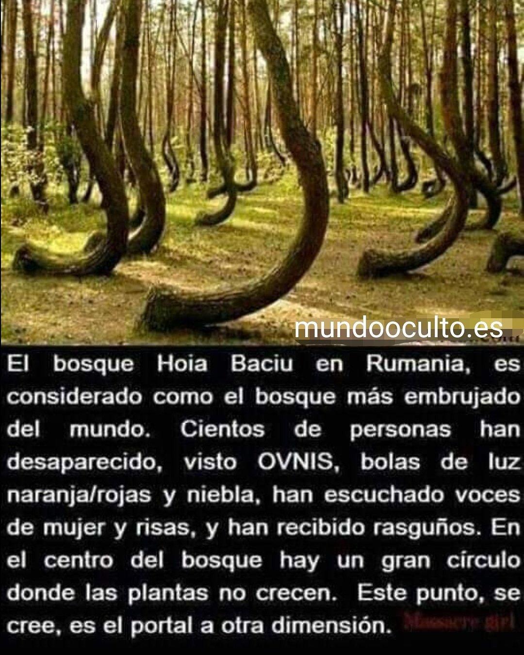 El bosque de Hoia Baciu