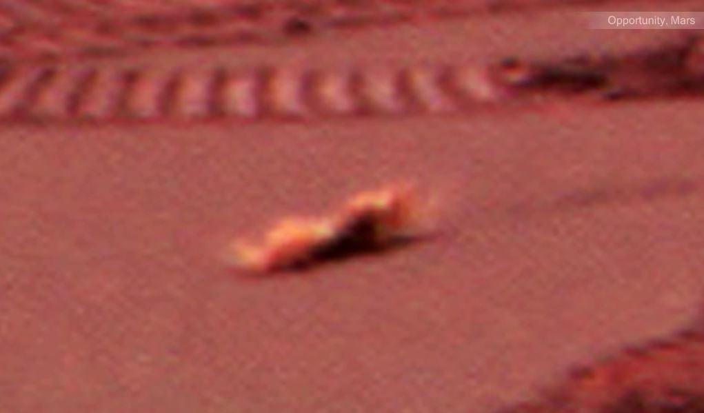 ¿Una criatura arrastrándose en Marte?