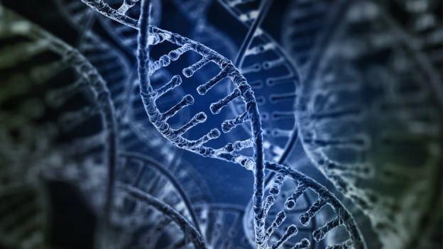 Los seres humanos no existiríamos de no haber intervenido los virus en nuestra evolución