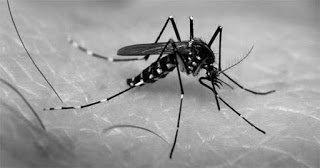 El Chikungunya fue creado en laboratorio y tienevacuna
