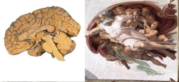 El cráneo humano sigue la Proporción Áurea, afirma nuevo estudio