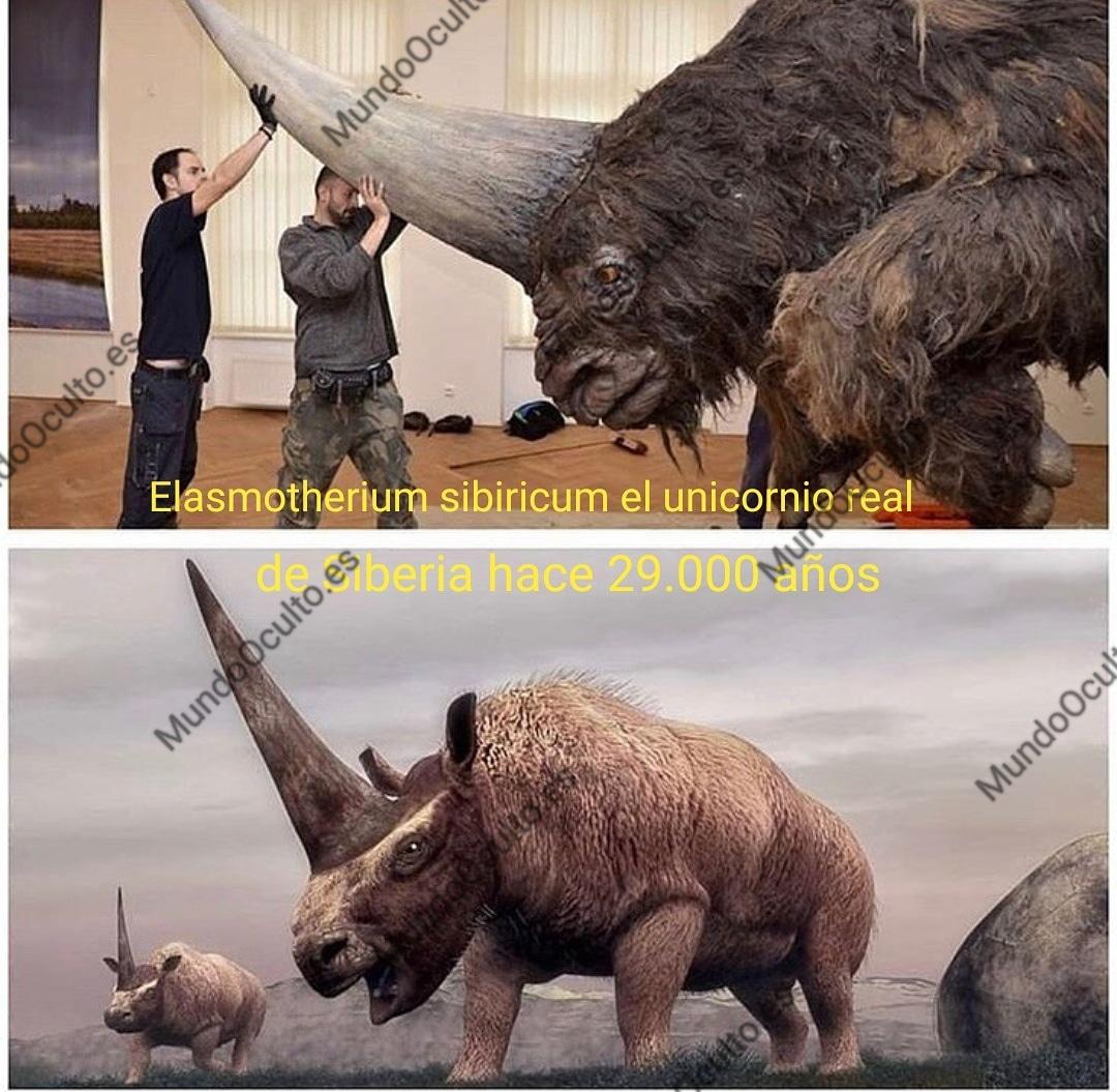 El unicornio real de Siberia