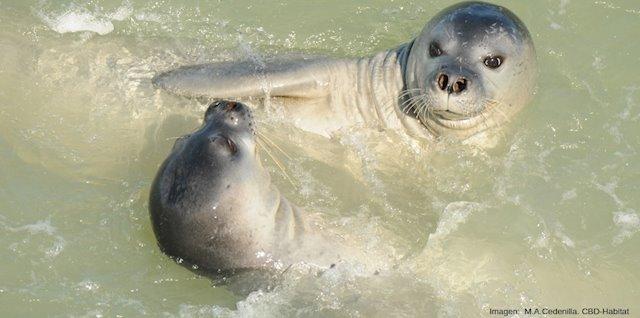 El deshielo del Ártico está propagando un virus mortal entre las criaturas marinas
