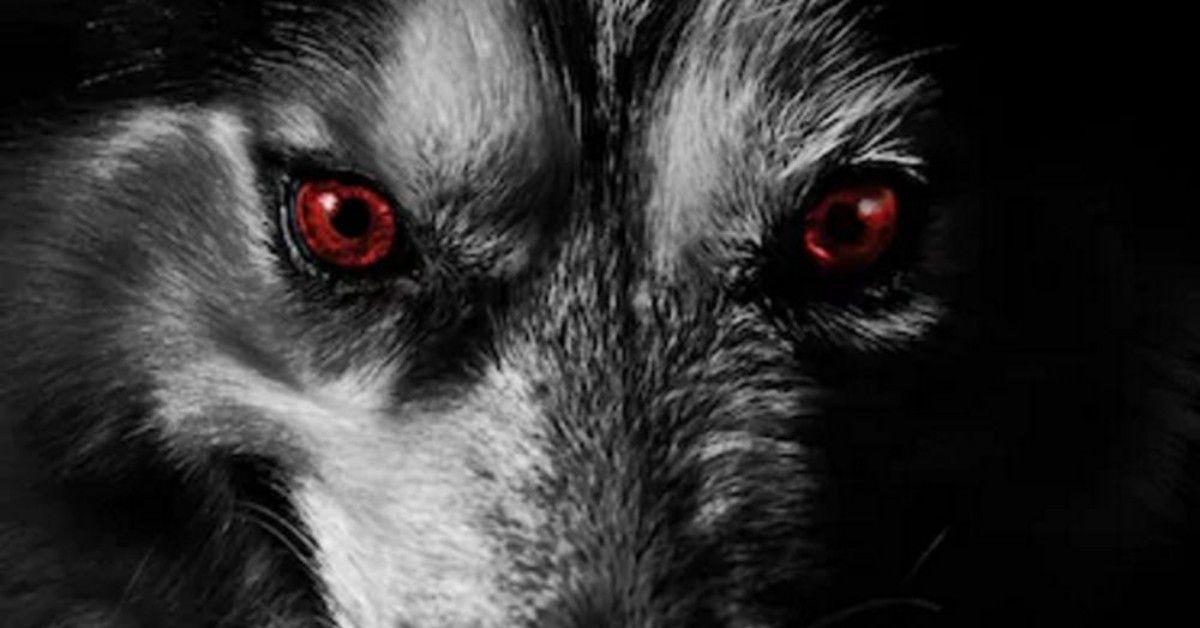 El perro que anuncia la muerte