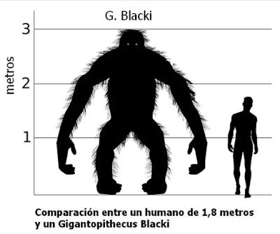 Estudio afirma que Pie Grande habría sido primo del orangután