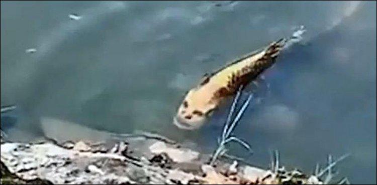 Extrañas criaturas parecidas a sirenas fotografiadas bajo el agua