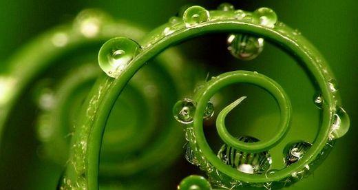 Las plantas tienen nuestros cinco sentidos y quince más