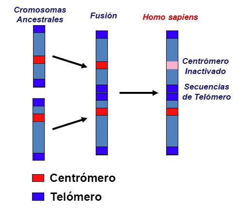 Los DESÓRDENES que demuestran que fuimos MANIPULADOS genéticamente. Descúbrelos AQUI