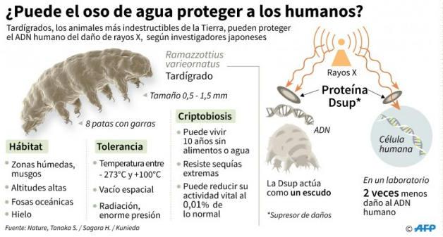 Plantean modificar humanos con ADN de tardígrados para lograr mayor resistencia a las condiciones de los viajes espaciales