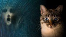 Los gatos actúan como un escudo defensor contra energías negativas