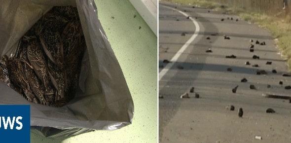 No otra vez: CIENTOS de aves caen del cielo cerca de una instalación 5G