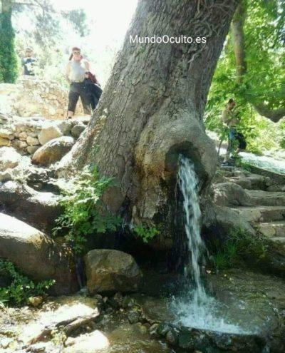 Un árbol que se convirtió en fuente