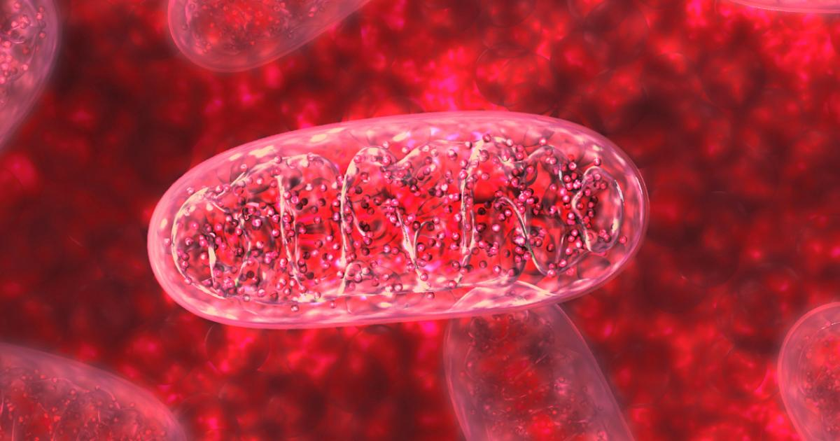 Identifican un nuevo componente de la sangre