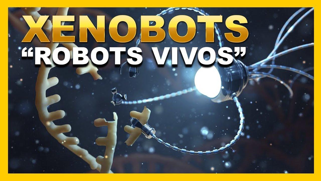 Los XENOBOTS los primeros «ROBOTS VIVOS» del mundo