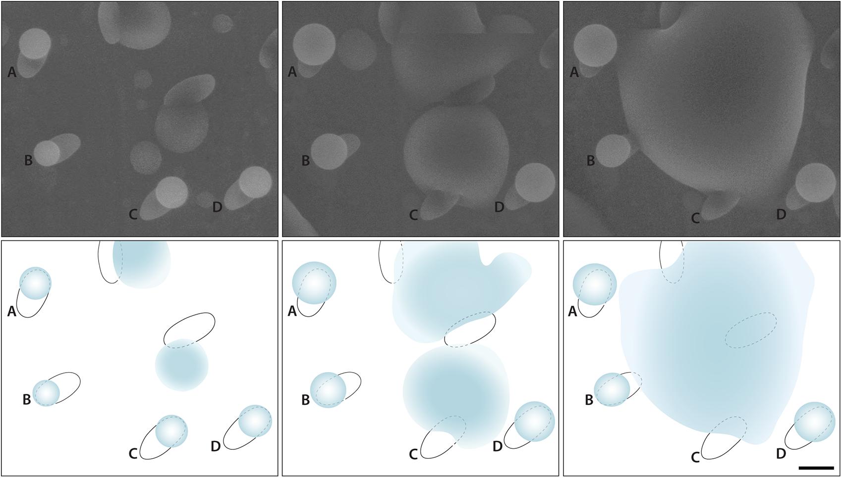 Resultado de imagen de esporas de formaciones de nubes