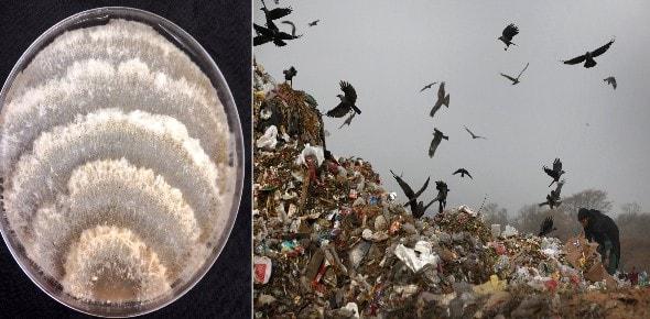 ¿Un Hongo que devora Plastico en la Amazonia Ecuatoriana?