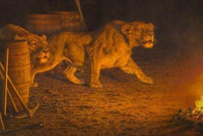 La leyenda de los leones de Tsavo