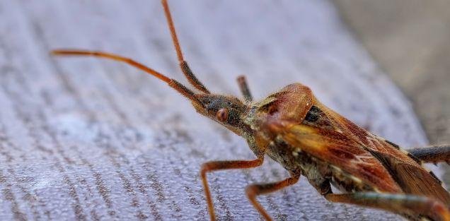 """Advertencia a la humanidad"""": el estudio que alerta sobre la catastrófica extinción de insectos"""