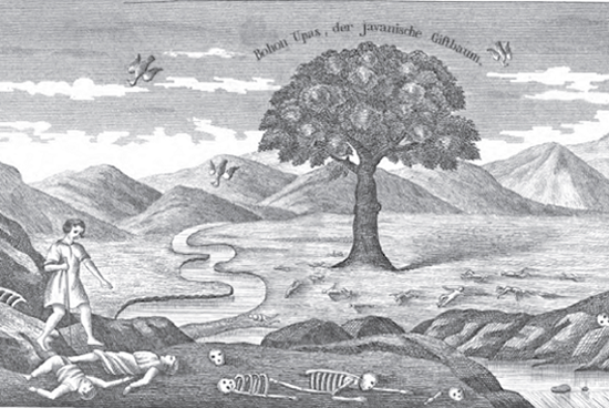 Misteriosas y sobrecogedoras historias sobre árboles asesinos
