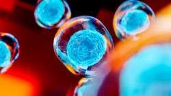 Los científicos han «restablecido» la edad celular de las células tomadas de una mujer de 114 años