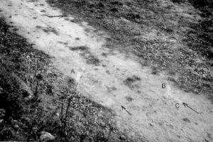 TransEnProvenceMark 300x201 Caso de Trans en Provence El caso mejor documentado sobre un aterrizaje de un un objeto volador no identificado