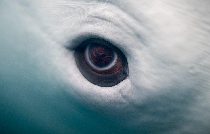 Ojo de delfín