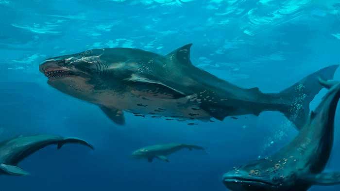 Hallan una cabeza de tiburón gigante mordida por criatura aún más grande