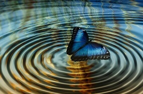 mariposa-suspendida-en-unas-ondas