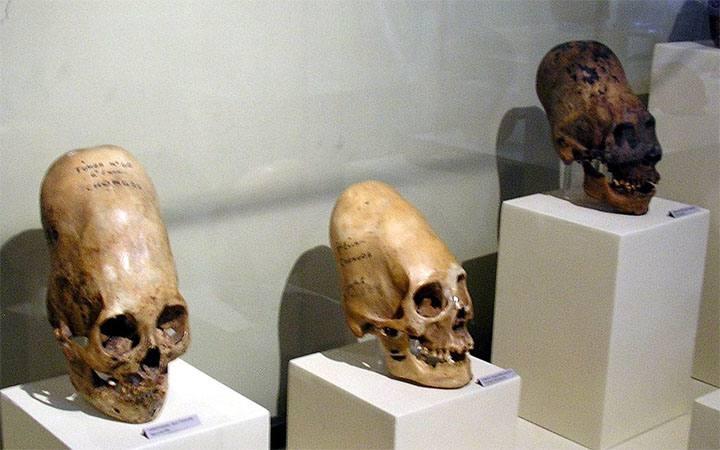 Homo-Capensis: ¿una especie que vive oculta entre la sociedad?.
