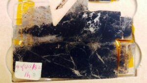 Fósil de aproximadamente 3,500 millones de antigüedad