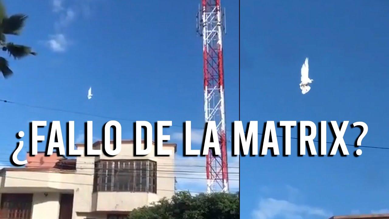 PALOMA SUSPENDIDA EN EL AIRE ¿FALLO DE LA MATRIX?