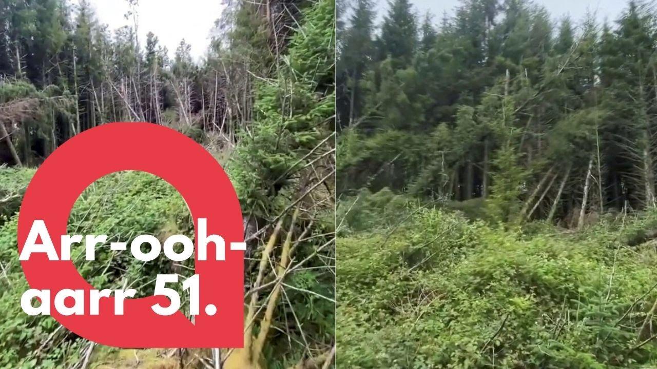 Un hombre descubrió un sitio de aterrizaje de ovnis en un bosque y escuchó gritos extraños