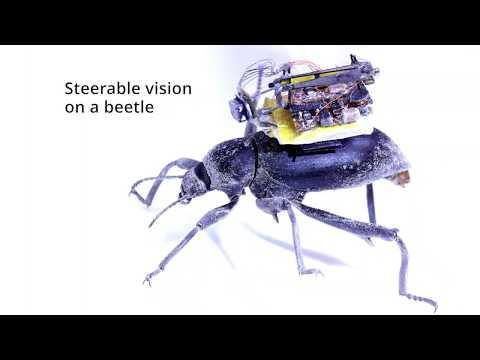 Ya es posible montar diminutas cámaras en insectos