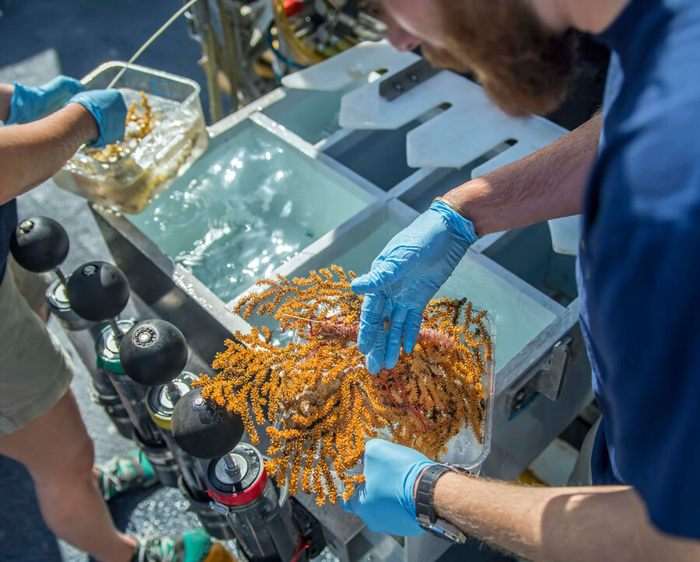 Hallan 30 nuevas especies de forma de vida en aguas profundas cerca de Galápagos