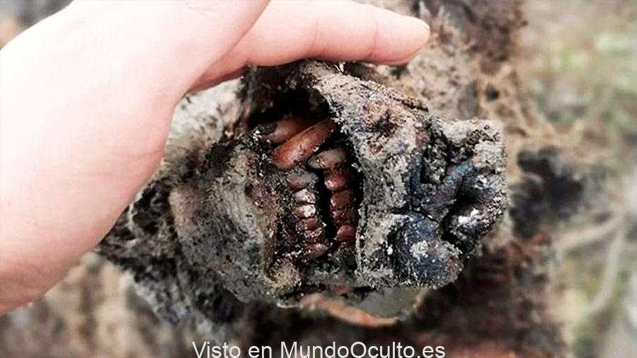 15-09-20-cadaver.jpg