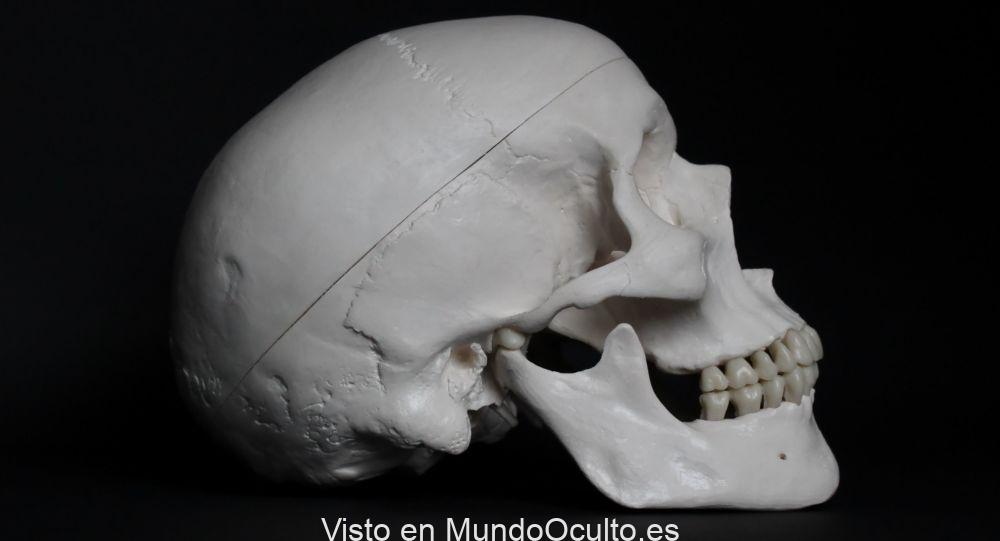 Científicos encuentran un órgano previamente desconocido en la cabeza humana
