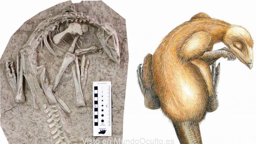 Descubren una nueva especie de dinosaurio tras encontrar sus remanentes fósiles perfectamente conservados