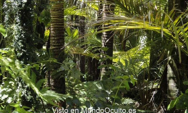 El 40% de la Amazonía podría existir ahora como ecosistemas de selva tropical o sabanas