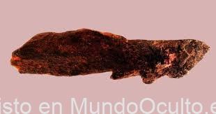 Hallan un conjunto de Herramientas de hueso de 800.000 años de Antigüedad, mucho Antes de la aparición de Homo Sapiens